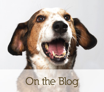 on the blog, supplements for dogs call to action
