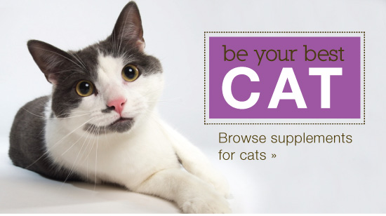 Be your best cat, herbs for pets, pet health herbs and pet supplements