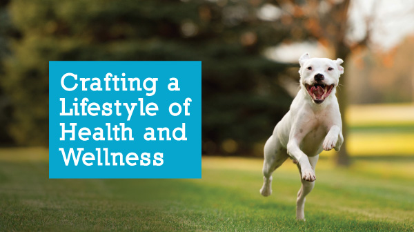 our dog willie, crafting a lifestyle of health and wellness, dog supplements, pet health herbs