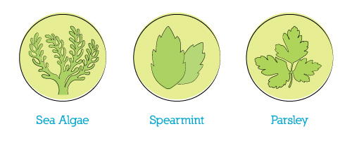 sea algae, spearmint, and parsley are featured ingredients in dog breath