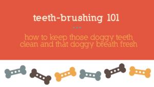 Teeth Brushing 101: How to keep those doggy teeth clean and that doggy breath fresh