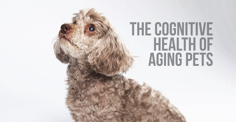 The Cognitive Health of Aging Pets