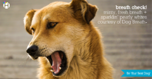 """Dog with his mouth open: """"Breath Check! Minty fresh breath + sparklin' pearly whites courtesy of Dog Breath"""""""