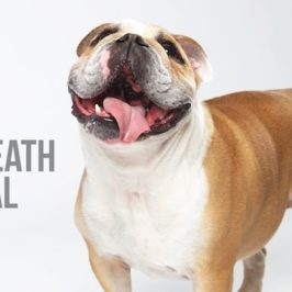 dog breath and dental health blog post