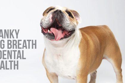 dog breath and dental health blog post