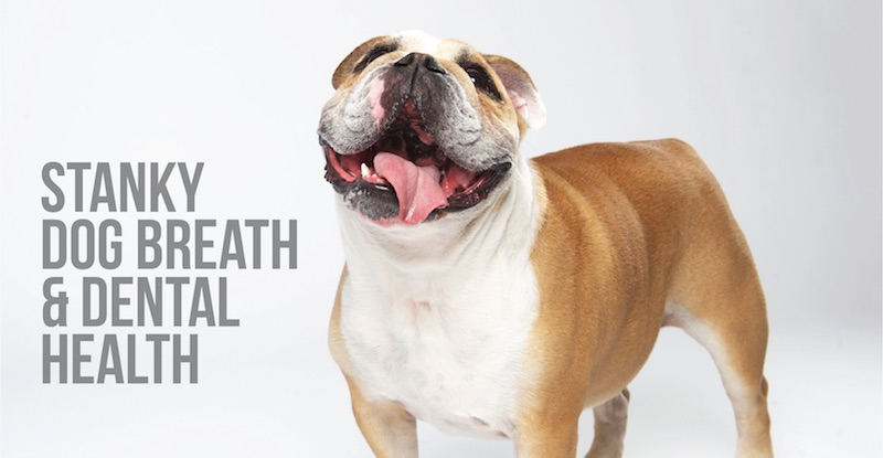 Stanky Dog Breath & Dental Health
