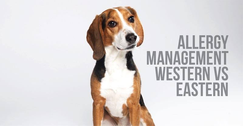 Allergy Management: Western vs. Eastern