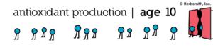 antioxidant production at age 10: around 20 (visual representation)