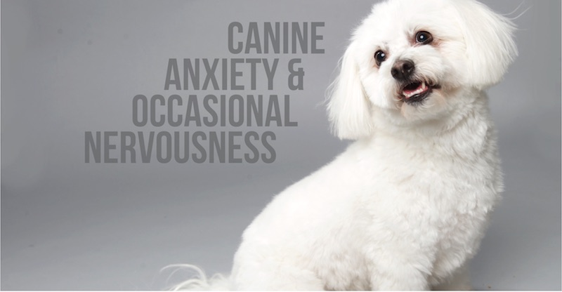 Canine Anxiety & Occasional Nervousness