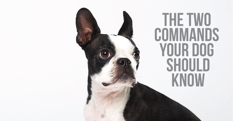 The Two Commands Your Dog Should Know