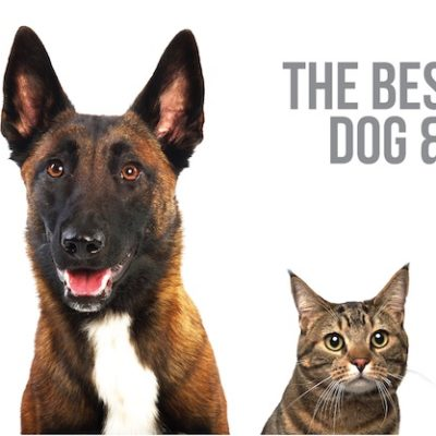 the best of dog and cat gifs blog post