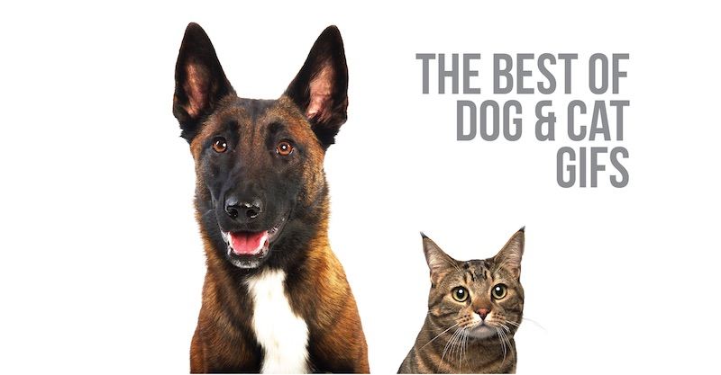 The best of dog AND cat GIFs