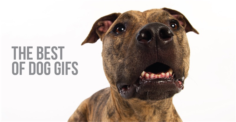the best of dog gifs blog post