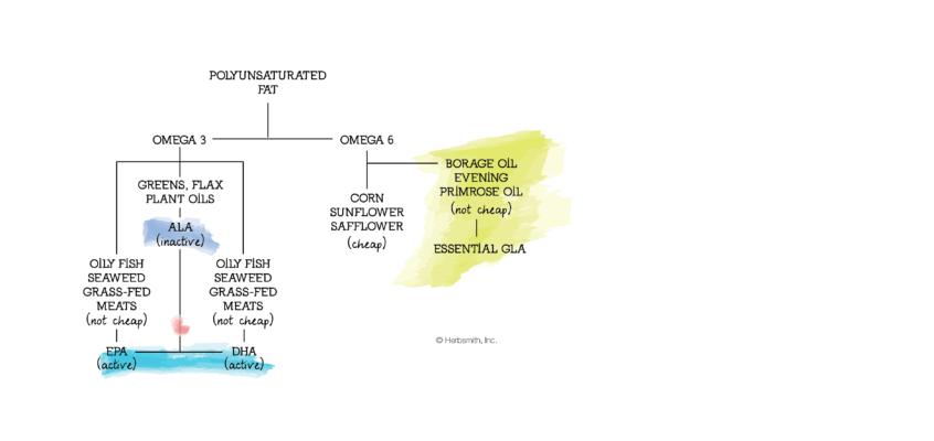Protected: EPA and DHA