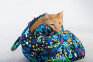 Kona hiding in a bag