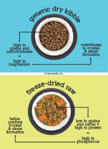Dry kibble is high in grains/carb = high in magnesium which contributes to crystal & stone formation, while freeze-dried raw food is low in grains and carbs and high in protein = high in phosphorus which helps prevent crystal and stone formation