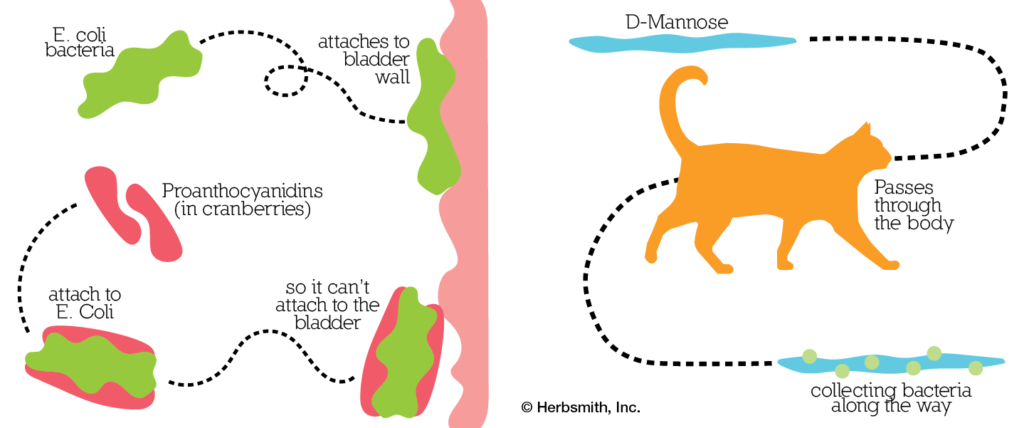 Proanthocyanidins and D-Mannose diagrams