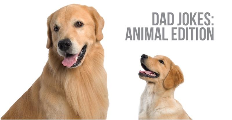 Dad Jokes: Animal Edition