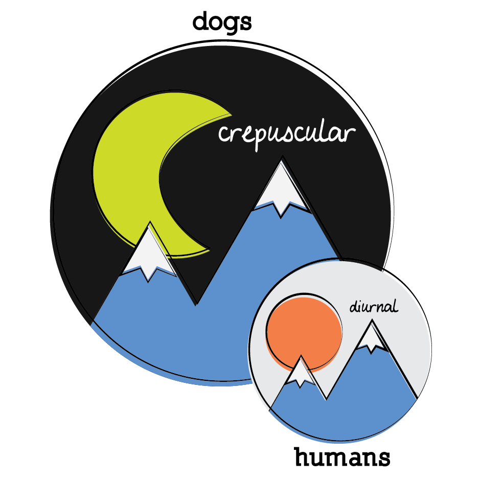 dogs are crepuscular (active at dawn and dusk) and humans are diurnal (active during the day)