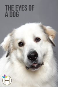 The Eyes of a Dog featured photo vertical