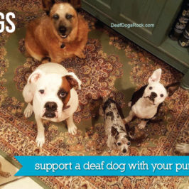 Deaf Dogs Rock!