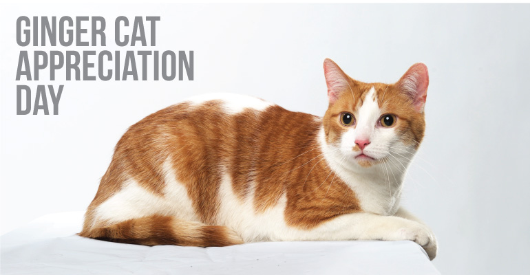 Ginger Cat Appreciation Day featured photo