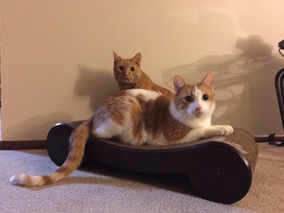 Kona and Joey the cats