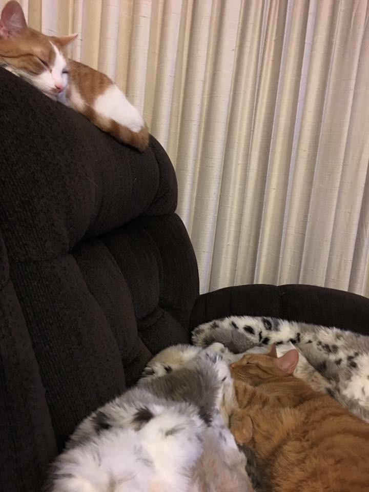 Joey and Kona snoozin'