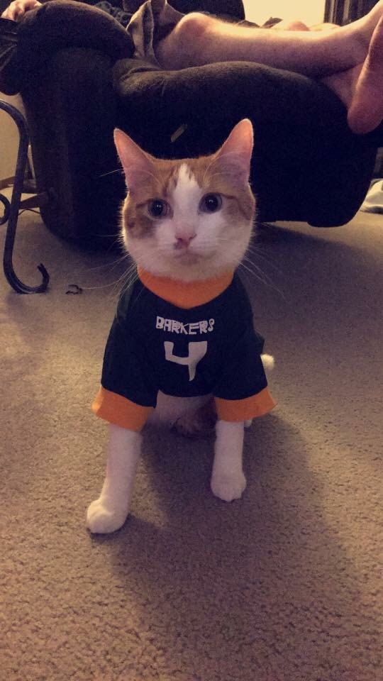 Joey the cat in a jersey