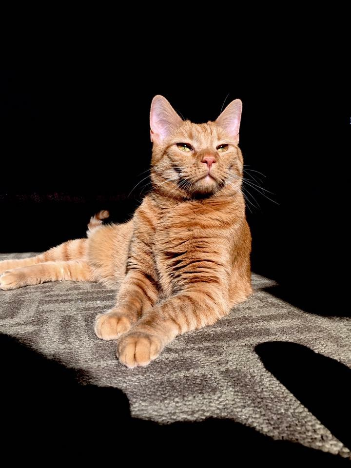 Kona the cat