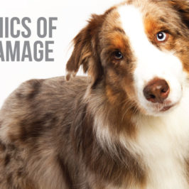 dog join damage and supplement