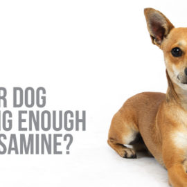 Is your dog's glucosamine supplement actually helping?