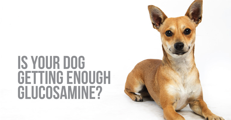 dog glucosamine supplement