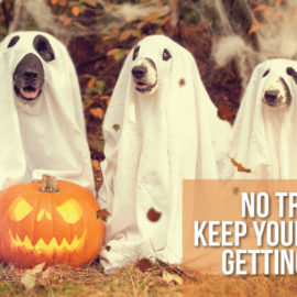 No Tricks Here: Keep your pet safe this Halloween!