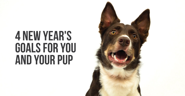 Our dog colt, in a call to action with 4 new year's goals for you and your pup