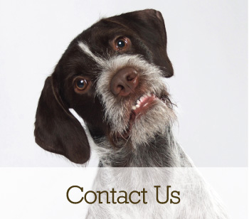 contact us cta, supplements for dogs