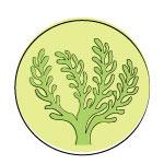 sea algae