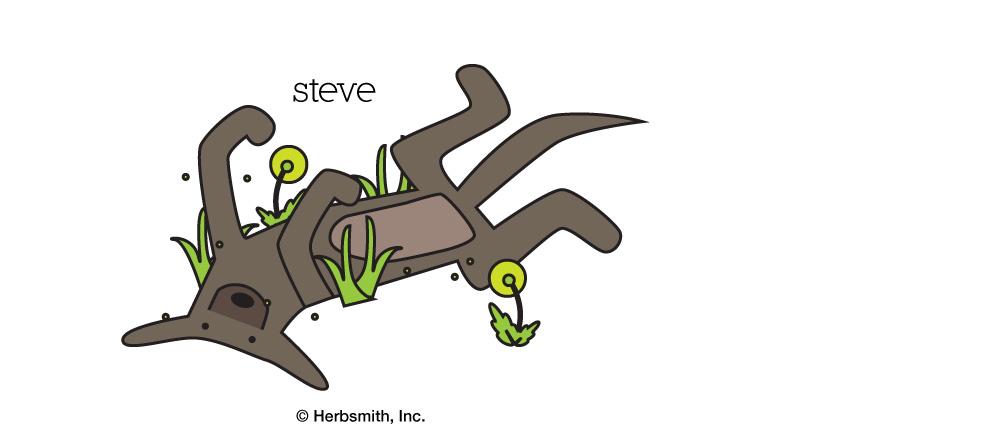1. Steve