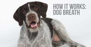 how dog breath dental treats work for dogs