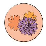 marigold-chrysanthemum