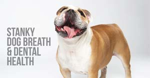 stanky dog breath and dental health with herbsmith