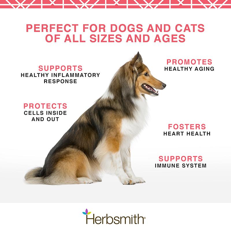 herbsmith-amazon-art-files-krill-dogs-cats-Final