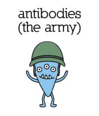 antibodies_color
