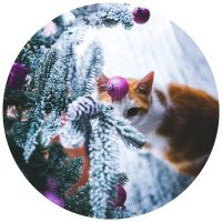 cat under tree